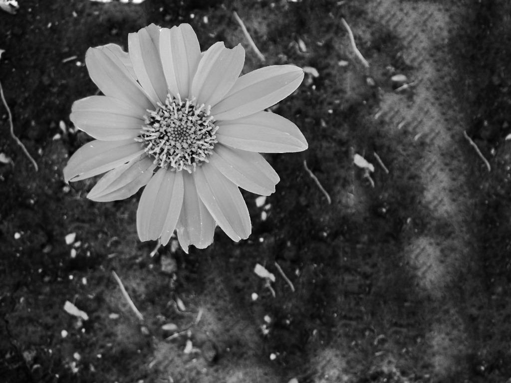 flower | People Always Leave